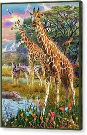 Acrylic Print featuring the drawing Giraffes by Jan Patrik Krasny