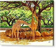 Giraffes Acrylic Print by Oleg Zavarzin