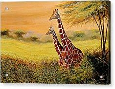 Giraffes Watching Acrylic Print