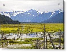 Girdwood Sunken Trees 2 Acrylic Print