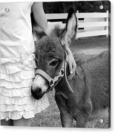 Girl And Baby Donkey Acrylic Print