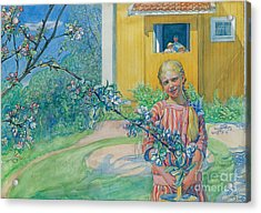 Girl With Apple Blossom Acrylic Print by Carl Larsson