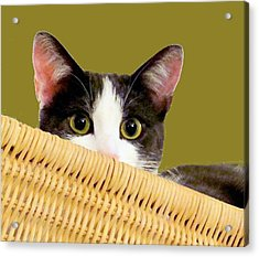 Acrylic Print featuring the photograph Girlie Cat  by Janette Boyd