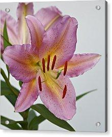 Girosa Lily Acrylic Print by Sandy Keeton