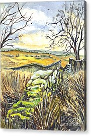 Gisburn Forest Lancashire Uk Acrylic Print by Carol Wisniewski