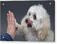 Give Me Five Acrylic Print