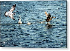 Give Me That... Acrylic Print by Steven Michael