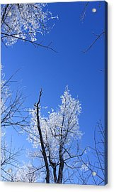 Givre Acrylic Print by Maude Demers