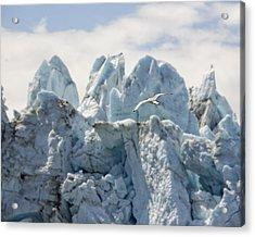 Glacial Flight Acrylic Print by Vicki Jauron