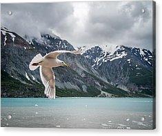 Glacier Bay Flyby Acrylic Print by Randy Turnbow
