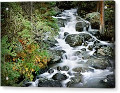 Glacier Creek Acrylic Print by Gary Peterson
