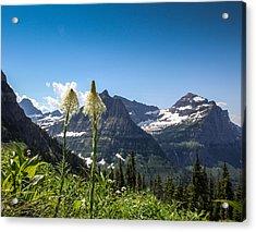 Glacier Grass Acrylic Print