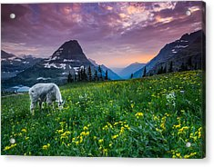 Glacier National Park 4 Acrylic Print by Larry Marshall