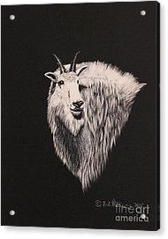 Glacier Park Goat Acrylic Print