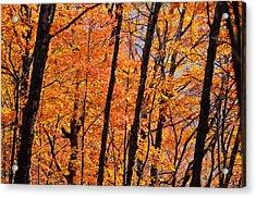 Glade Top Trail Acrylic Print