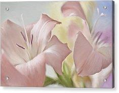 Gladiolas I Acrylic Print