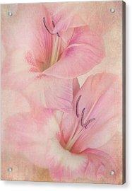 Gladiola IIi Acrylic Print