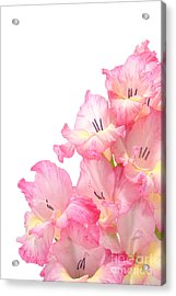 Gladiolus Acrylic Print by Olivier Le Queinec