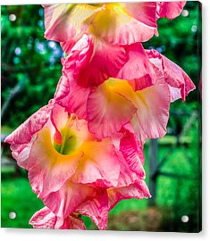Acrylic Print featuring the photograph Gladiolus by Rob Sellers