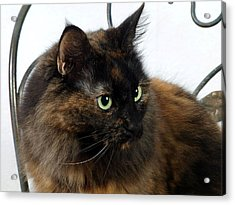 Glamor Kitty Acrylic Print by Camille Lopez
