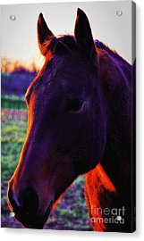 Acrylic Print featuring the photograph Glamour Shot by Robert McCubbin
