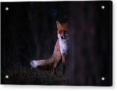 Glances Acrylic Print