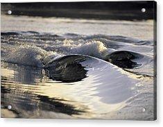 Glass Bowls Acrylic Print by Sean Davey