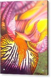 Glavis Iris Acrylic Print