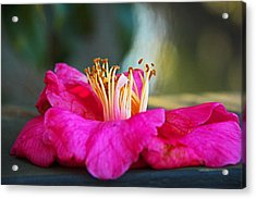 Acrylic Print featuring the photograph Glencairn Garden 020 by Andy Lawless