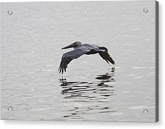 Glide Acrylic Print by Charles Warren