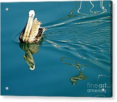 Gliding Acrylic Print by Clare Bevan