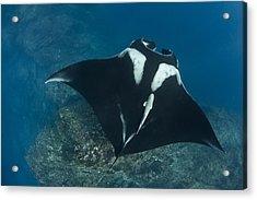Gliding Acrylic Print by David Valencia