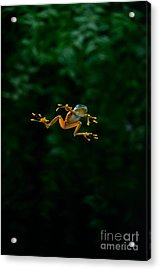 Gliding Frog In Flights Acrylic Print by Scott Linstead