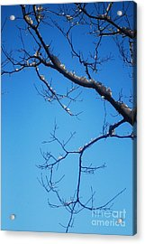 Glimmering Branches Acrylic Print by Susan Hernandez