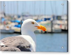 Acrylic Print featuring the photograph Glimpse by Nick David