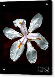 Glisten Acrylic Print