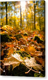 Glistening Autumn Dew Acrylic Print by Mark David Zahn