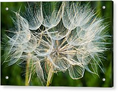 Glittering In The Grass Acrylic Print