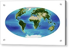Global Chlorophyll Levels Acrylic Print by Nasa Earth Observatory/ocean Color Web/geoeye