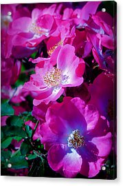 Glorious Blooms Acrylic Print