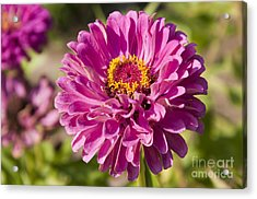 Glorious Flower Acrylic Print