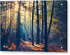 Glorious Forest Morning Acrylic Print by Diane Alexander