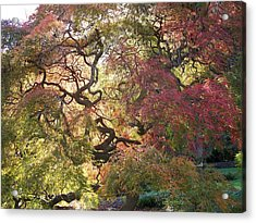 Glorious Tree In The Arboretum Acrylic Print by Rick Todaro