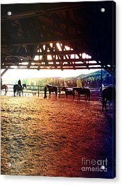 Acrylic Print featuring the photograph Glory In Horses by J Ferwerda