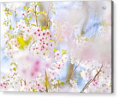Glory Of Spring Acrylic Print
