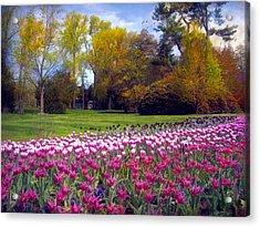 Glory Of Tulips Acrylic Print