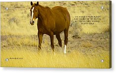 Glory To The One Who Loves Us Acrylic Print by David  Norman