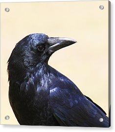 Glossy Crow Acrylic Print by Bob and Jan Shriner