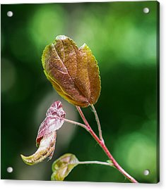 Glossy Nature - Featured 3 Acrylic Print by Alexander Senin