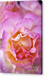 Glow From Within Acrylic Print by David Millenheft